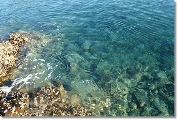 雄勝湾の透き通った海