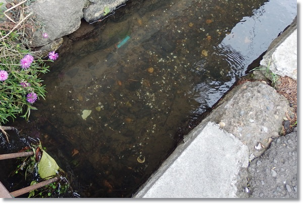 街の中を流れる水路