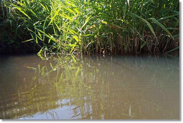 水生植物が生える水辺