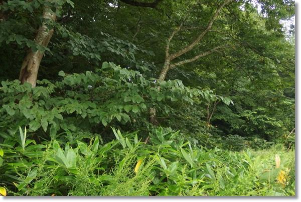 下草が覆い茂る雑木林