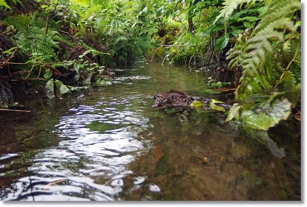 藪の中を流れる小さな小川