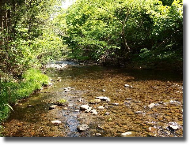 林間の流れる渓流