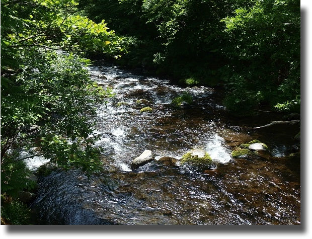 キラキラ輝く渓流の流れ