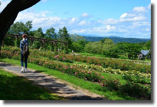やくらいガーデンの花畑を歩く妻