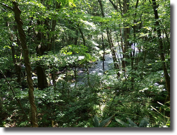 木々の間から見える谷川