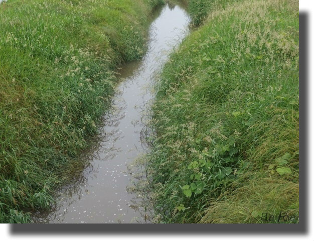 田園地帯を流れる小川