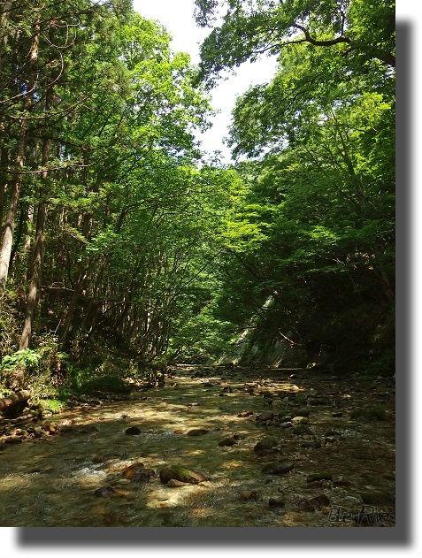 林間の流れ