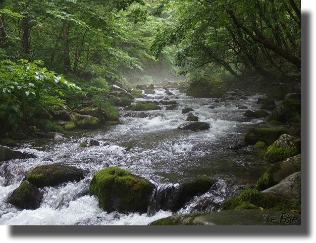 雨に濡れる山の中の流れ
