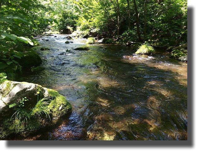 林間を流れる清流