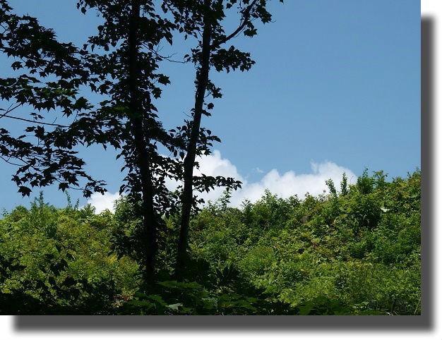 山の中から見る青空