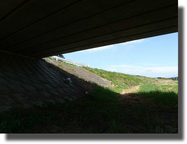 橋の下の草原