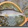 岩魚開拓釣行