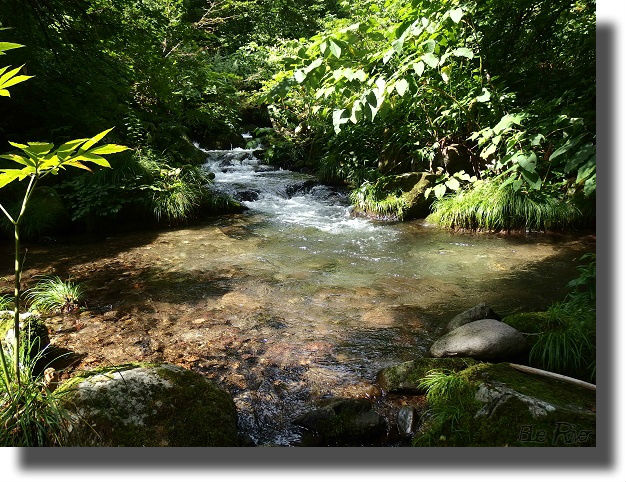 林間の小さな流れ