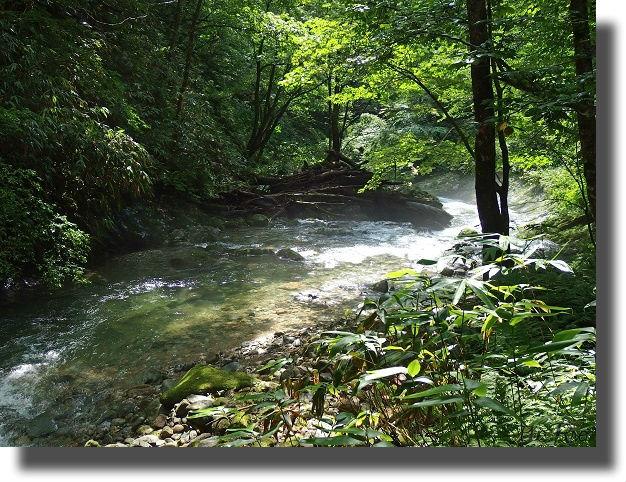 綺麗な林間の流れ