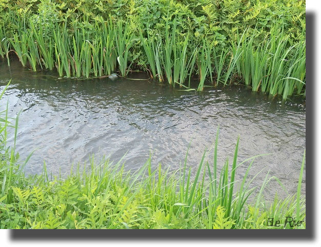 植物が生い茂る小川