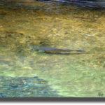 下北に渓魚を求めて