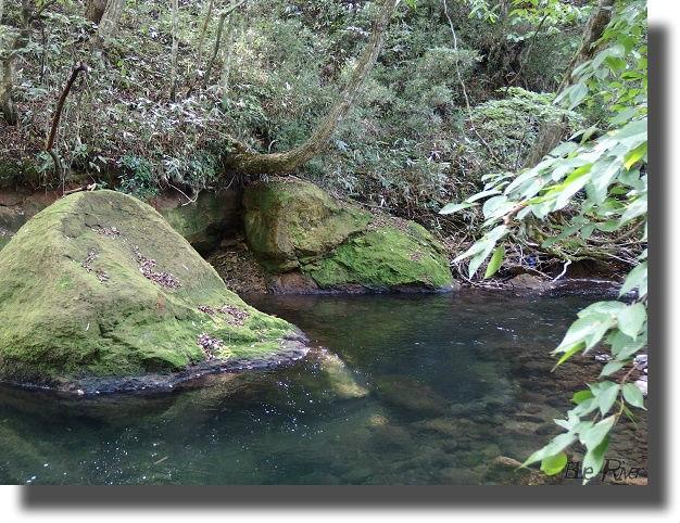 透き通た川の流れ