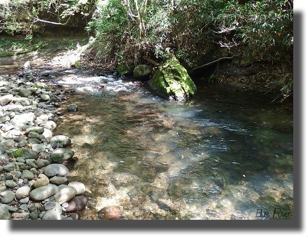 落ち葉が混じる川の流れ