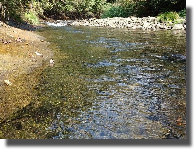 落ち葉が流れる里川
