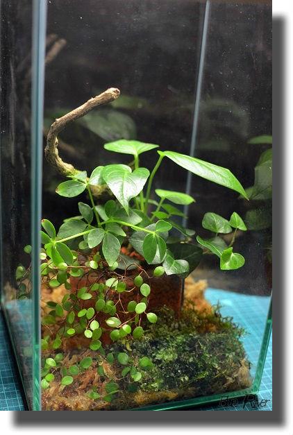 観葉植物が中に入った小さなガラス水槽