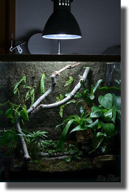 ライトに照らされるビバリウム水槽