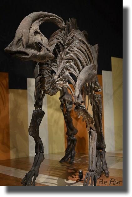 ほるるに展示されている恐竜骨格標本
