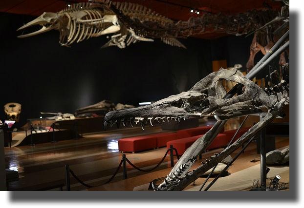 るるに展示されている恐竜骨格標本
