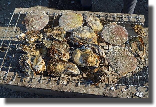 牡蠣とホタテの炭焼き