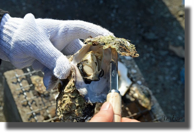 焼き牡蠣を剥く