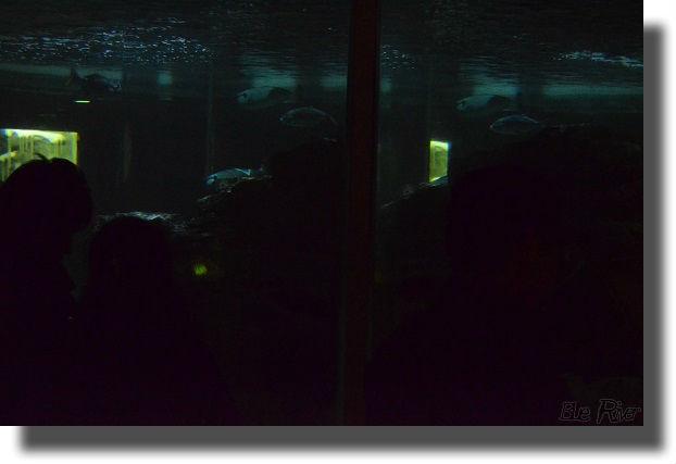 マリンピア松島水族館ナイトアクアリウム