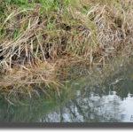 師走のタナゴ釣りに挑戦