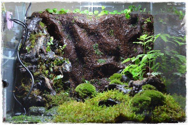 水を循環させたカエル飼育レイアウト