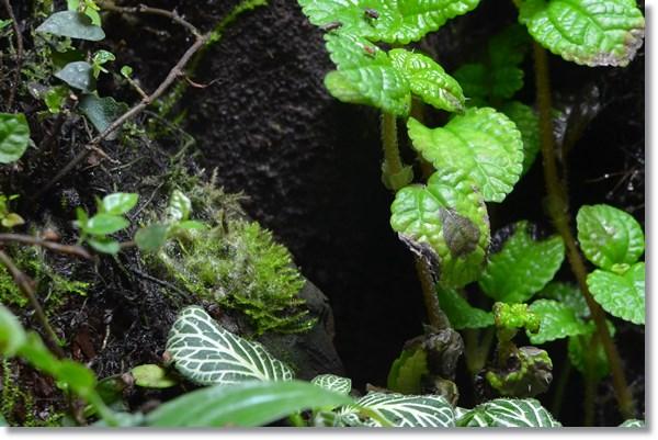 ビバリウム内の植物の蒸れ害
