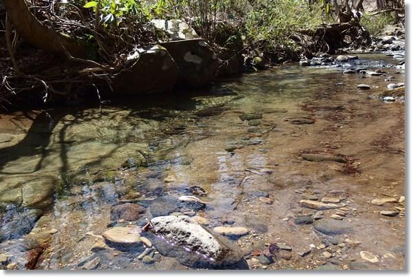 透き通った川の流れ