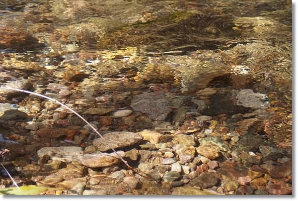 清流の浅瀬