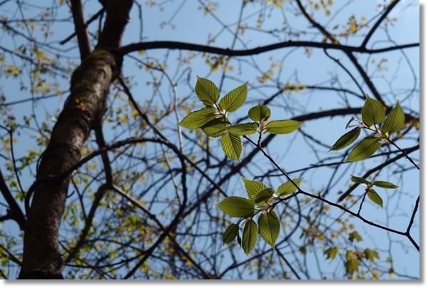 青い空に芽吹く木々