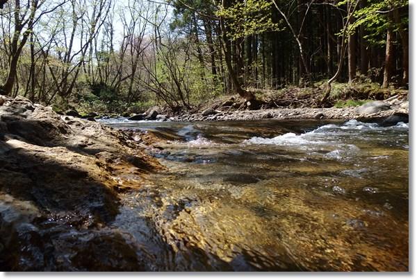 芽吹いた木々と渓流
