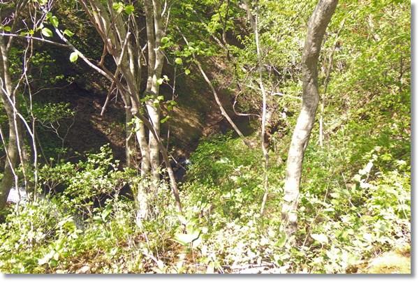 林道から谷底を見た景色