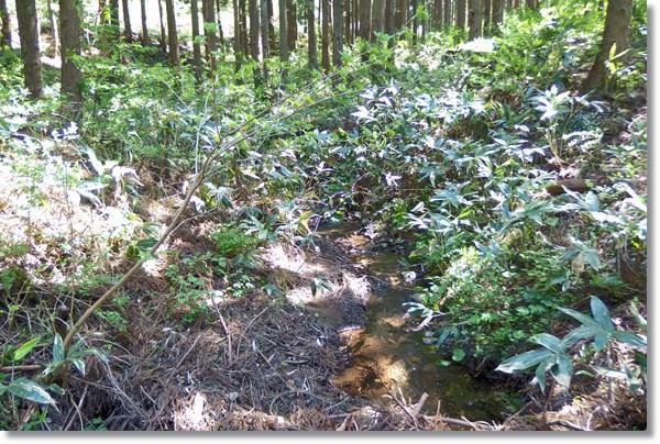 笹薮の中を流れる枯れ沢
