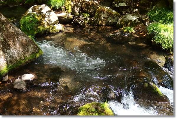 山の中の綺麗な水の流れ