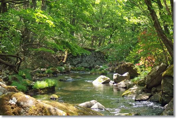 緑鮮やかな林間の流れ