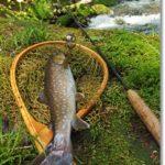渓流釣りハイシーズンとミラクルと
