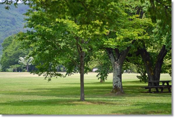公園の芝生の中の木々