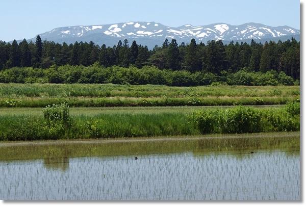 奥羽山脈と田んぼの風景