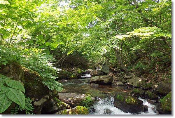 林間を流れる川